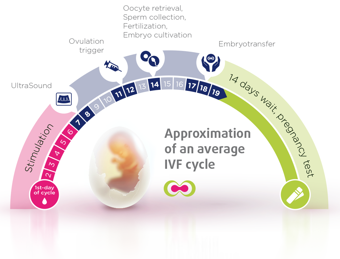 Approximation of an average #IVF cycle | Kiddie | Ivf cycle, Ivf