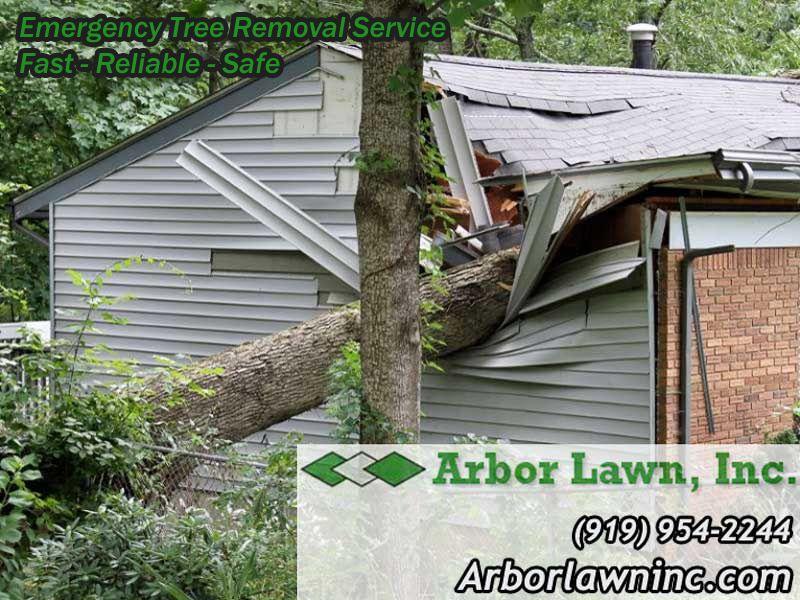 Tree Removal Service Tree removal, Tree removal service
