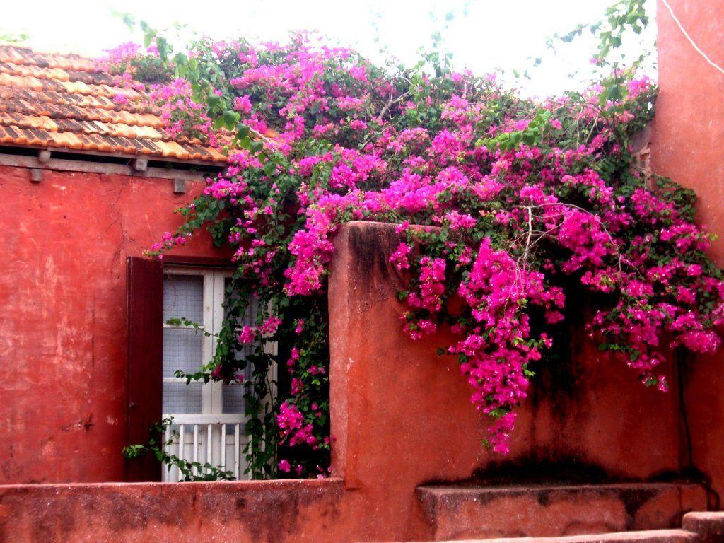 Bugambilia  Mexico  Mexican colors Color Garden