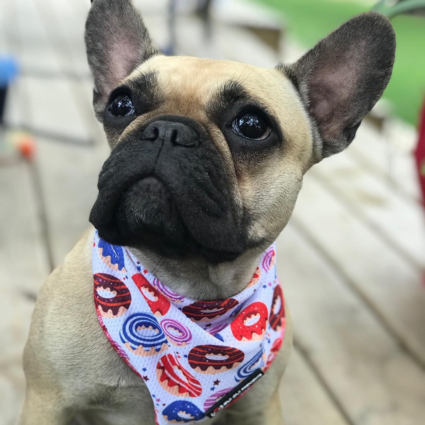 Who's ready for some donuts?  🍩  📷: @frenchie_mama_squad  Designed for compact breeds like #frenchbulldogs #bostonterriers #pugs and #corgis 🐶⁣ www.ouiouifrenchie.com ⁣⁣⁣⁣⁣⁣⁣  #frenchbulldog #frenchieoftheday #donutbandana #frenchielove #pupsofinsta #dogoftheday #instafrenchie #instadog #frenchies #frenchiecute #frenchiemom #frenchiesociety #dogmom #frenchbulldogsofinstagram #frenchiesofig #frenchielove #reversibleharness #dogclothes #frenchiecute  #ouiouifrenchie