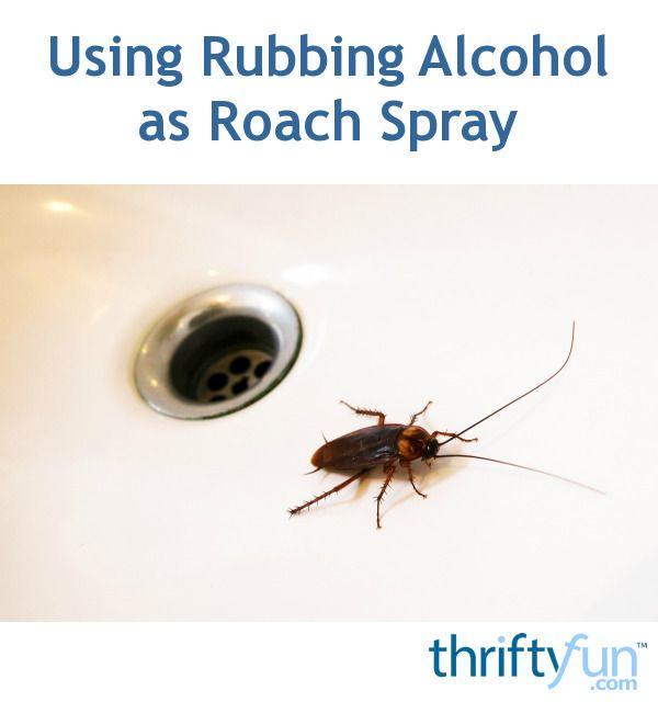 Using Rubbing Alcohol as Roach Spray | Pest Control