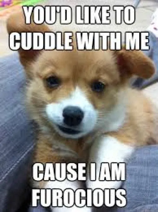 Top Romantic Cuddle Memes And Quotes For Him Her In 2019 Cuddling Cuddling Meme Romantic Memes