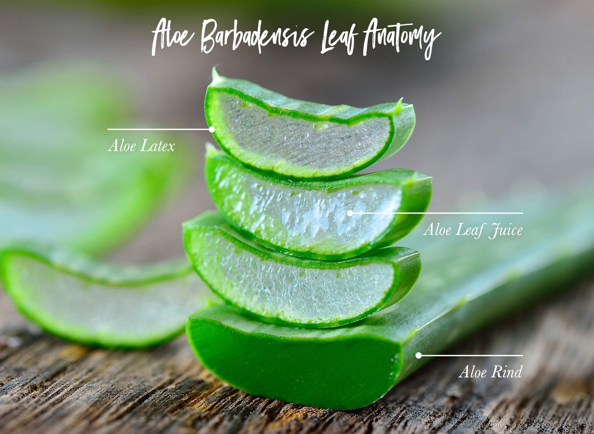 With So Many Health And Skin Benefits We Re Heading Down South On Our Sustainable Road Trip To Lea Aloe Vera Skin Care Anti Aging Beauty Secrets Skin Benefits