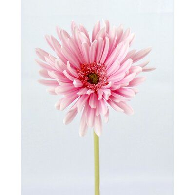 August Grove Elegant Live Feel Real Touch Needle Gerbera Daisy