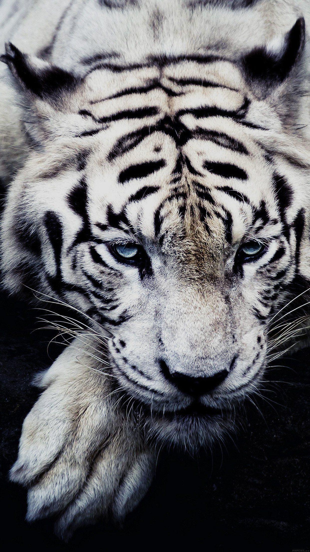White Tiger Animal Iphone6 Plus Wallpaper Mobile Wallpapers Wild Animal Wallpaper Animals Wild Pet Tiger