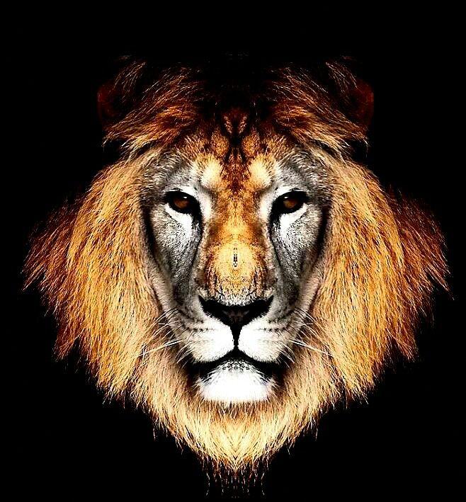 Pin By Daniel Teixeira On Lions Den