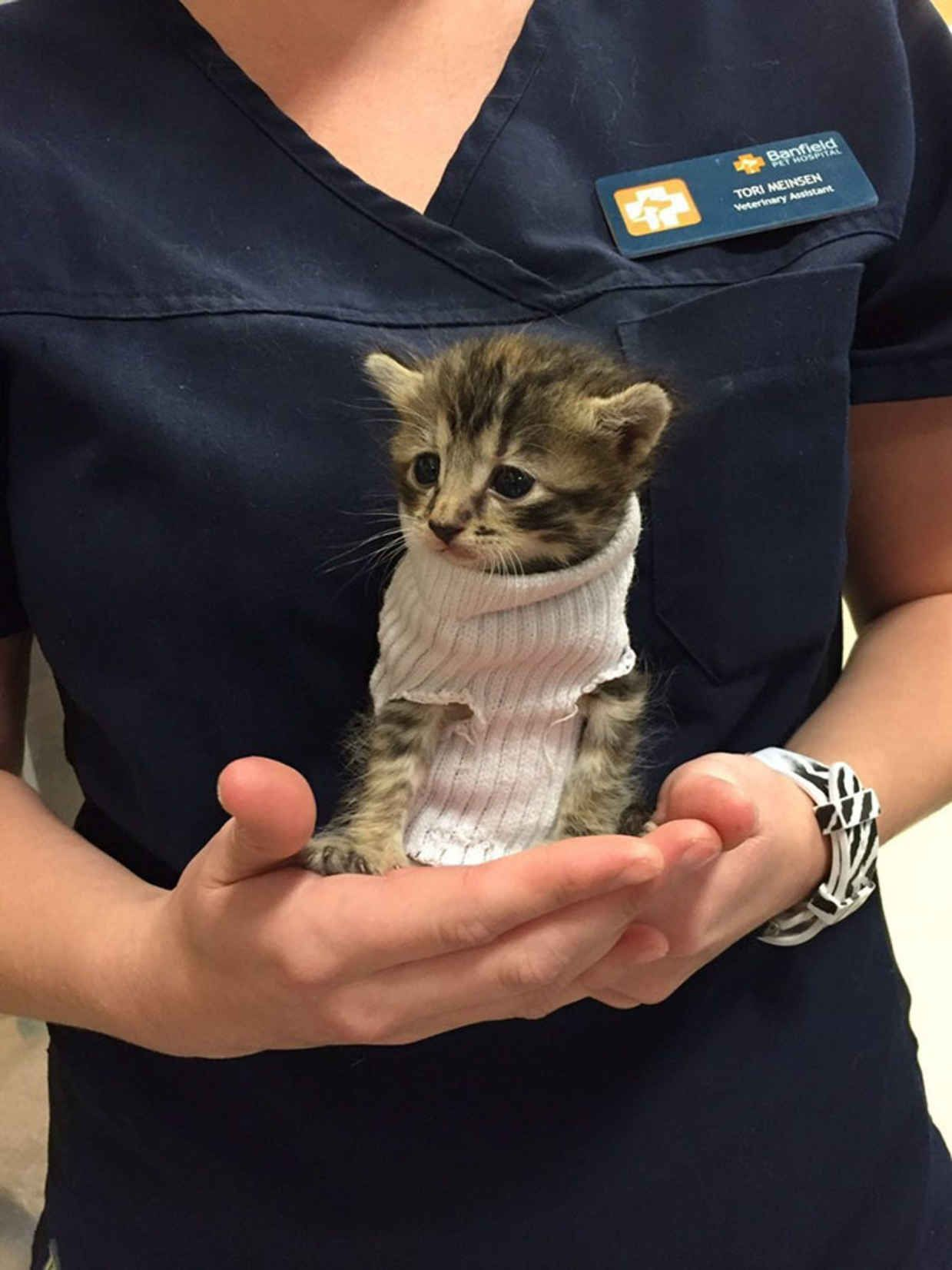 Tiny Kitten Is Rescued from Hurricane Matthew, Gets Given Tube Sock Sweater - BlazePress