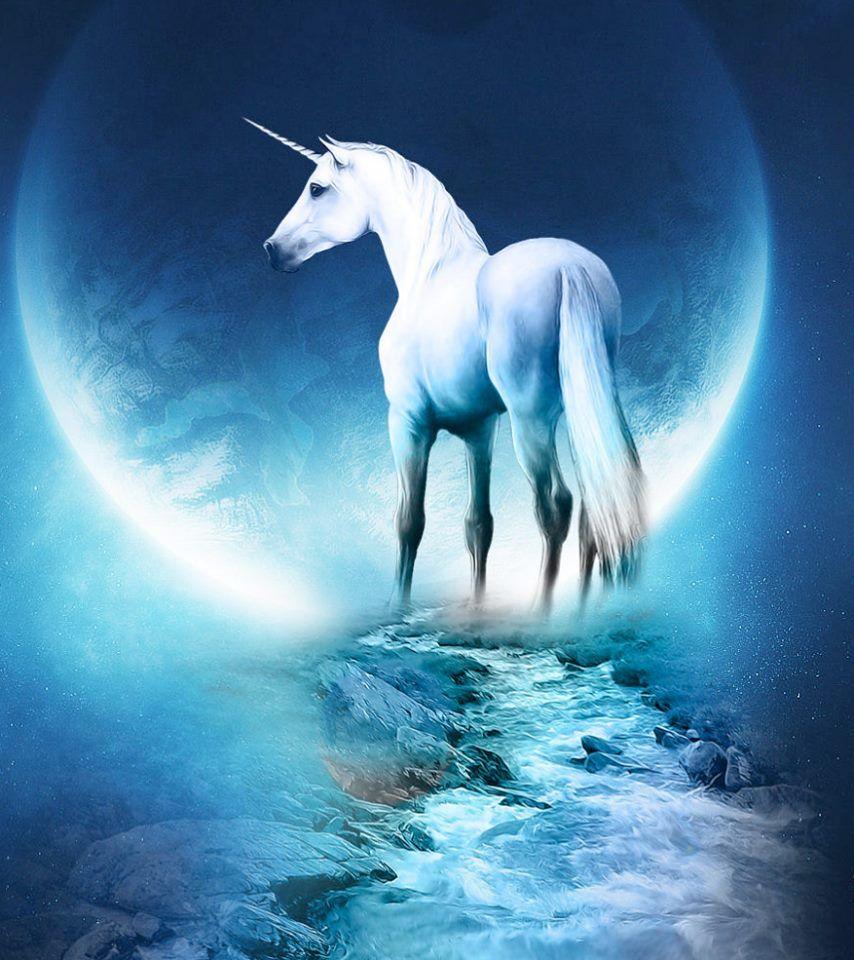 Best Wallpaper Horse Unicorn - 7d8a5e3144426f97121b2aa7bb7a593a  Pic_288495.jpg
