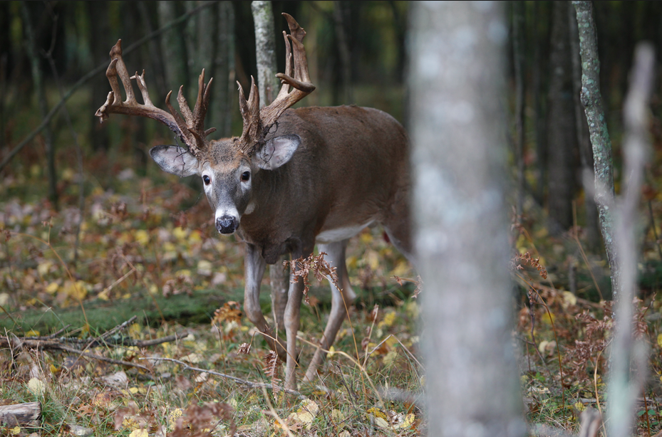 Apple Creek Whitetails