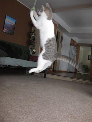 Pictures and video of my cat flying through the air hes young and cat mozeypictures Images