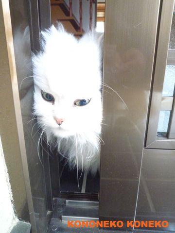 バニラの日常 - ペルシャ猫@バニラの日記