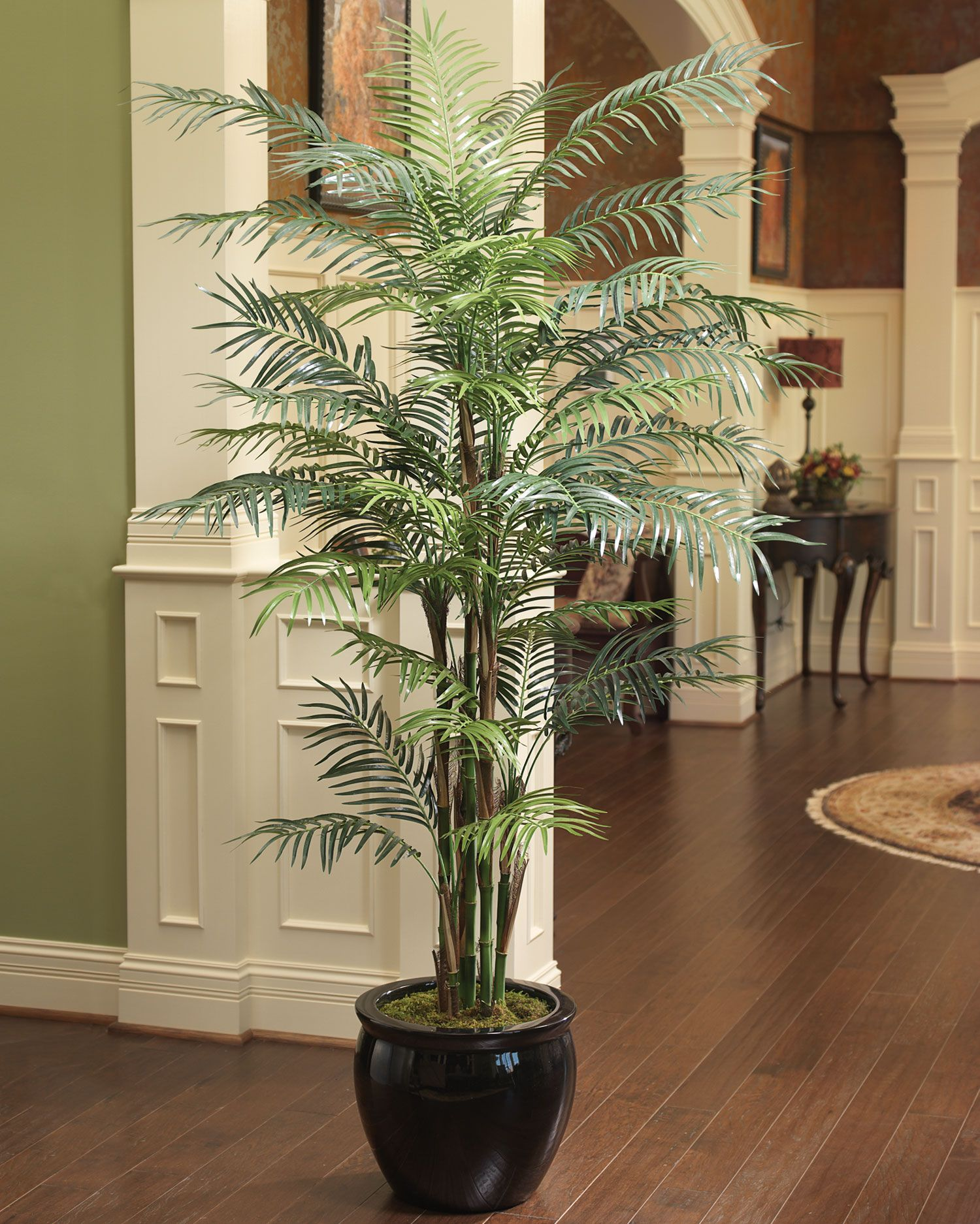 7 Reed Palm Silk Tree Indoor Palm Trees Indoor Plants Silk Tree