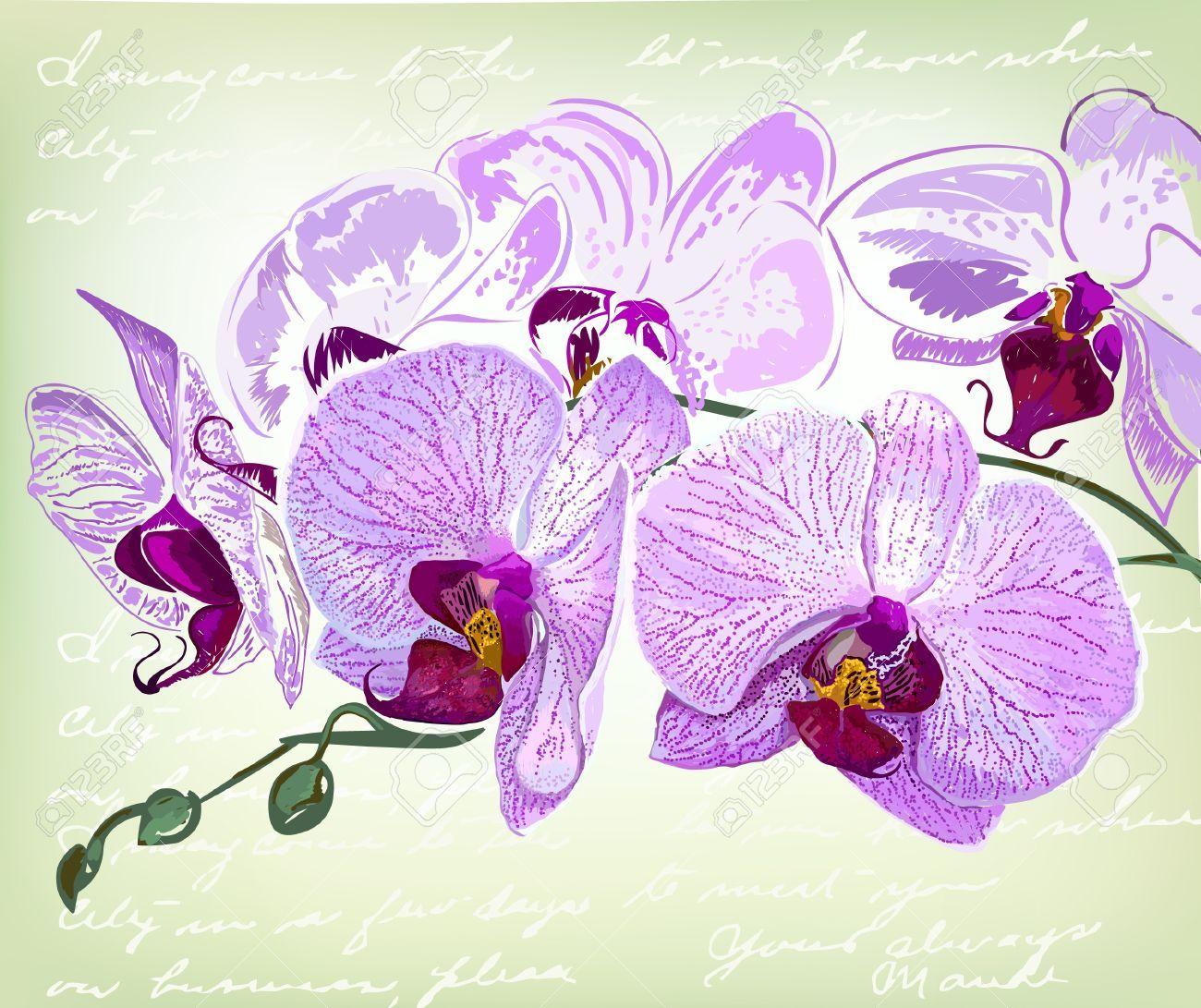 Beau dessin fleur de la main orchid e clip art libres de droits orchid es pinterest - Dessin d orchidee ...