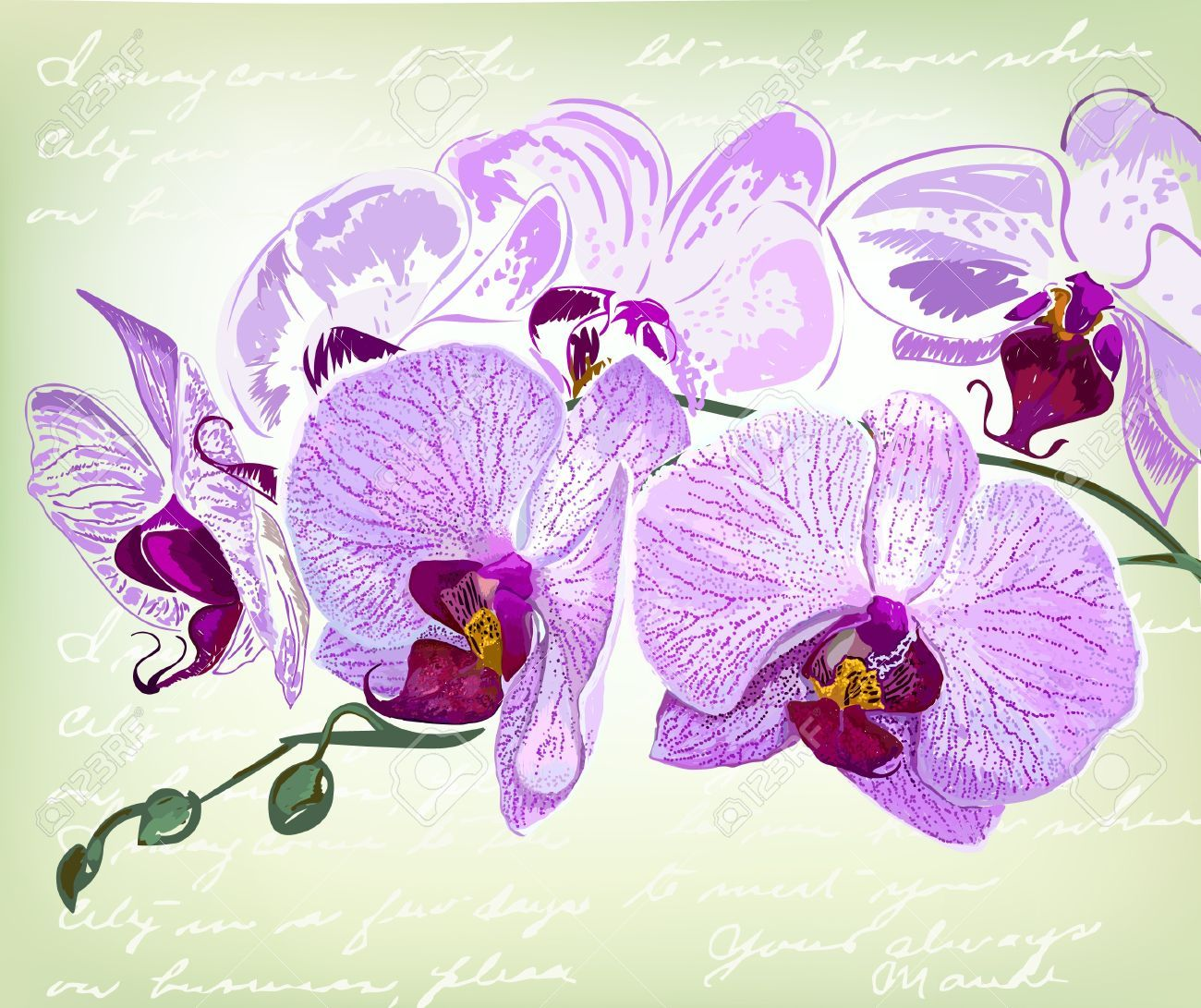 Stock Photo Dessin Orchidee Dessin Fleur Et Beaux Dessins