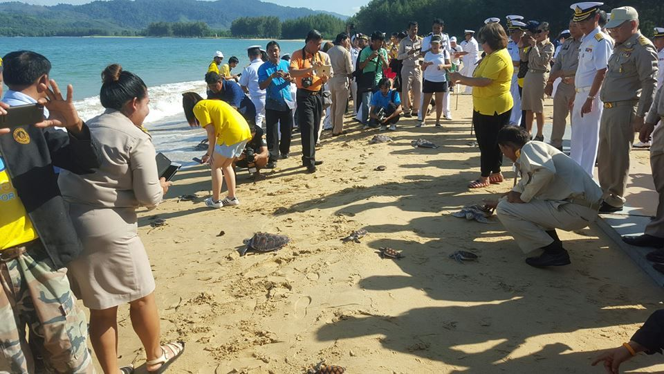 Image result for turtles released in thailand for king's birthday
