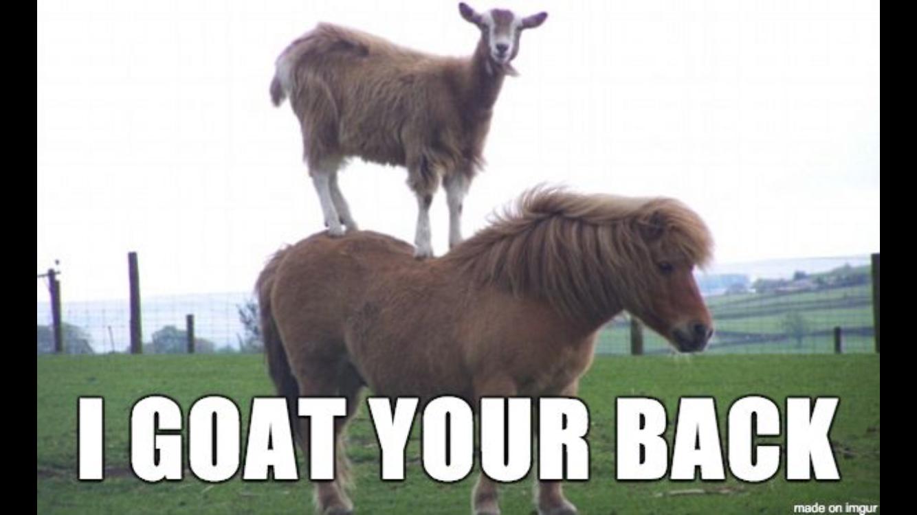 "goat on pony's back with ""I goat your back"""
