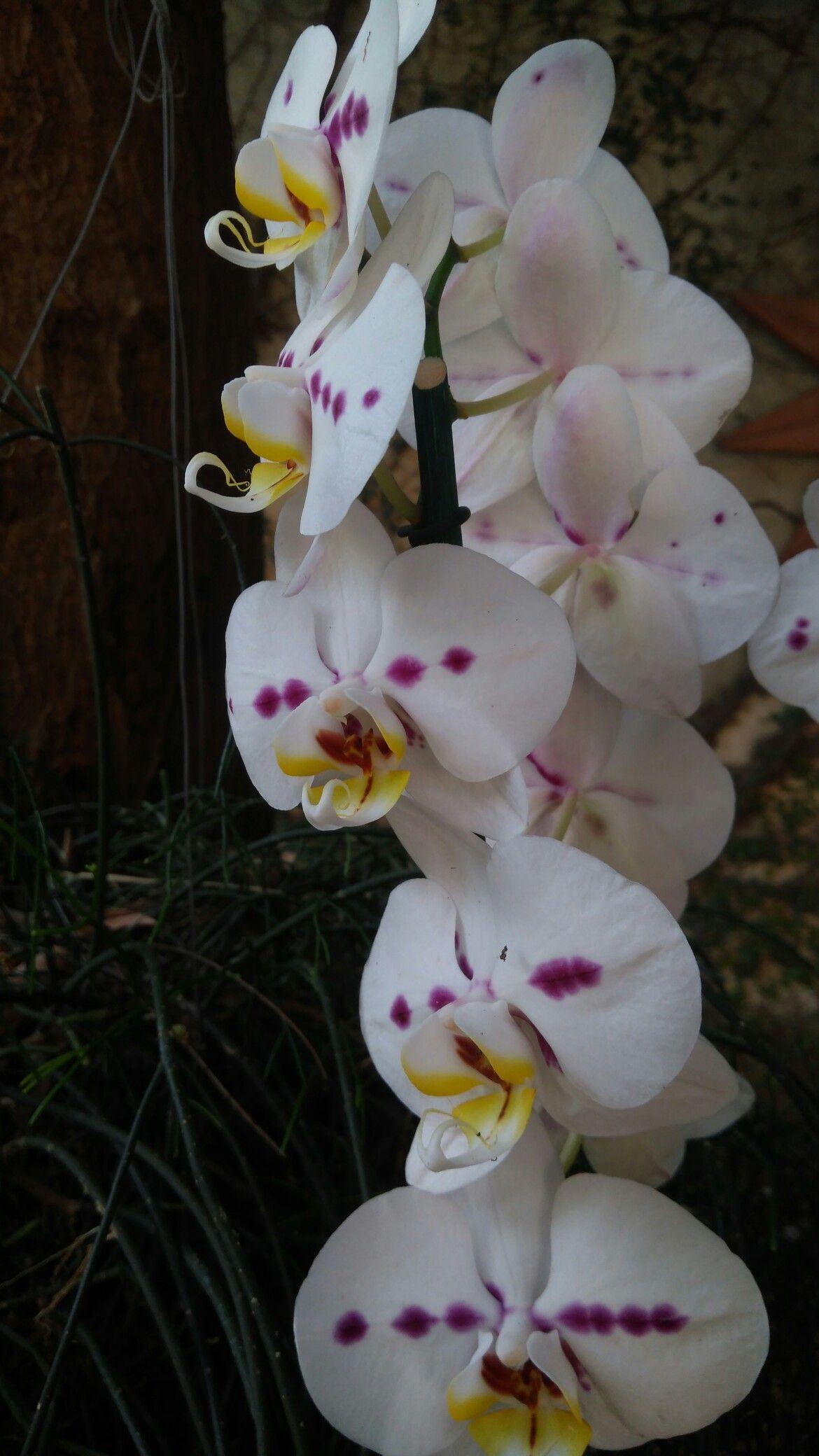 Pin de Divando Barbosa em Flores Caldas novas