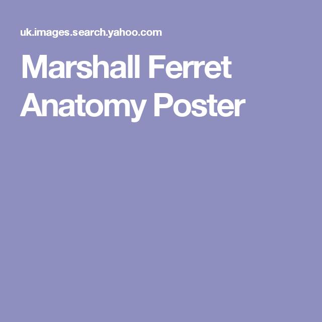 Marshall Ferret Anatomy Poster Ferret Anatomy Anatomy Biology