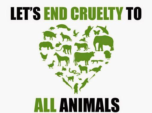 stop animal abuse animal rights animal and fur babies stop animal abuse