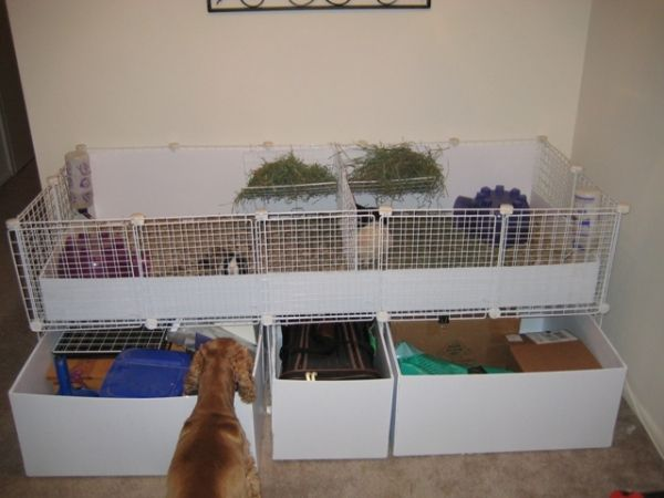 Use leftover coroplast to make slide out bins to store for Plastic bin guinea pig cage