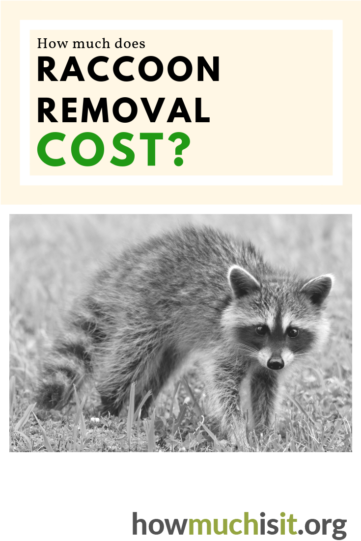 How Much Does Raccoon Removal Cost Raccoon Removal How To Remove Raccoon