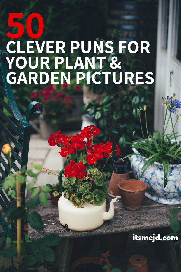 50 Funny Plant And Garden Puns That Are Too Clever For Their Own Good Gardeningcaptions Gardenpuns Gardeningpuns Gardenquotes Garden Puns Plant Puns Plants
