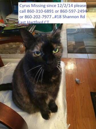 Help me find my cat please (East Hartford CT) Cyrus has