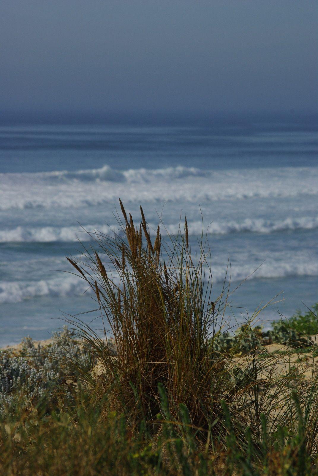 plage, dune, océan, sable, oya, Mimizan, les landes, aquitaine, France, paysage