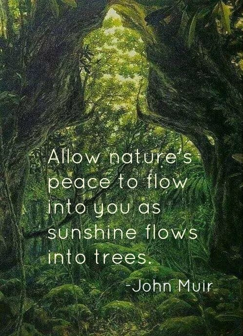 Citaten Natuur : John muir quotes citaten natuur and teksten