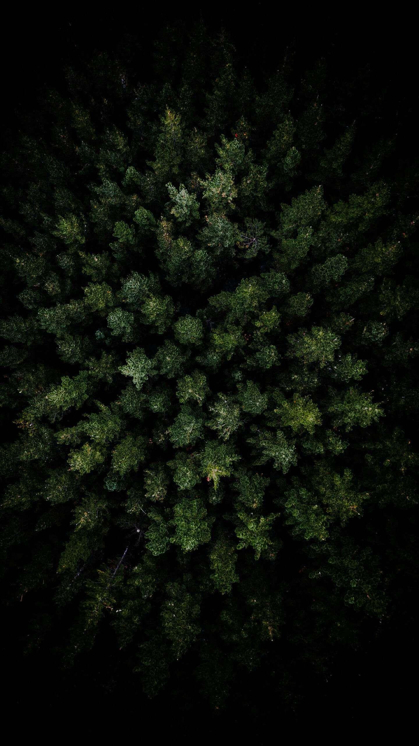 Dark Forest Aerial View Iphone Wallpaper Iphonewallpaper Iphone Wallpaper Android Androidw Forest Wallpaper Iphone Iphone Wallpaper Green Nature Wallpaper