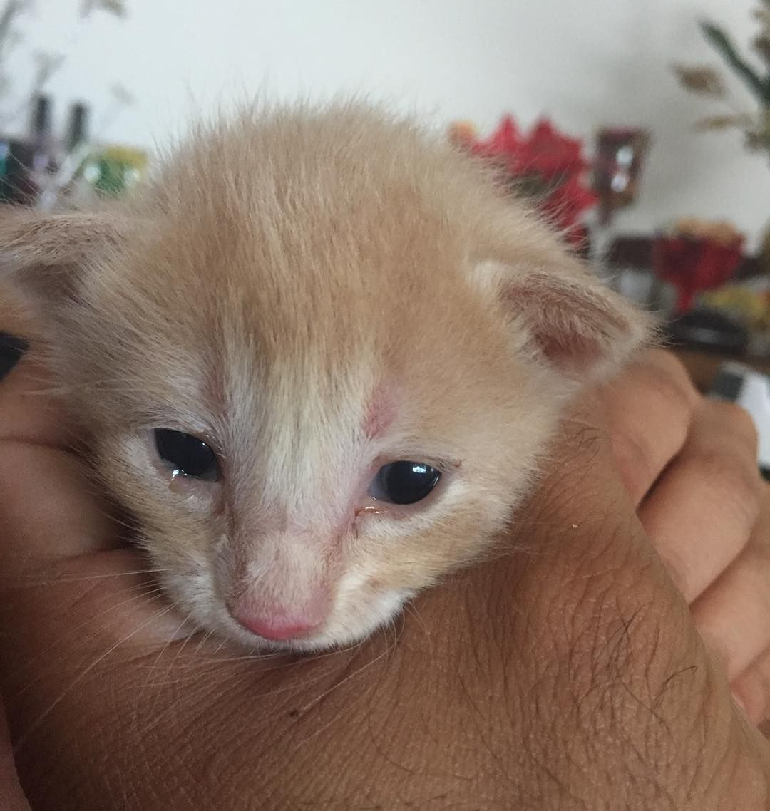 provocative-planet-pics-please.tumblr.com Feliz 2016 ! #cat #babies #baby #loved #lindos #fight #naodormen #filhotes #gatos #nosleep #adoraveis #mother #son #mae #filho #anonovo #home #puppies #puppy #cateyes #nature #natureza #planets #bichos #newyear #athome #comela #travelingtogheter #universo #myfionce by francisco_limaiv_ https://www.instagram.com/p/BAAN64Yzhr1/