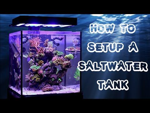 how to set up a saltwater fish tank aquarium the sea in an tank