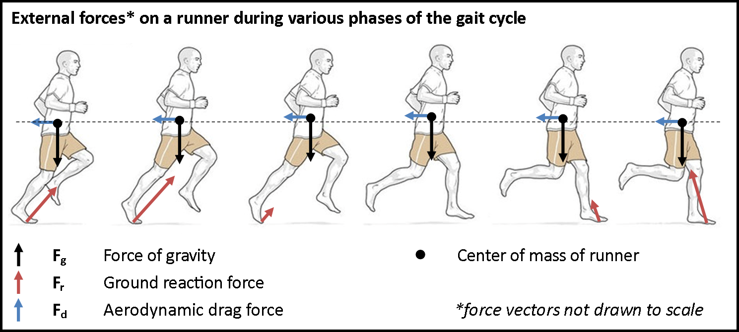 running  external forces during gait cycle