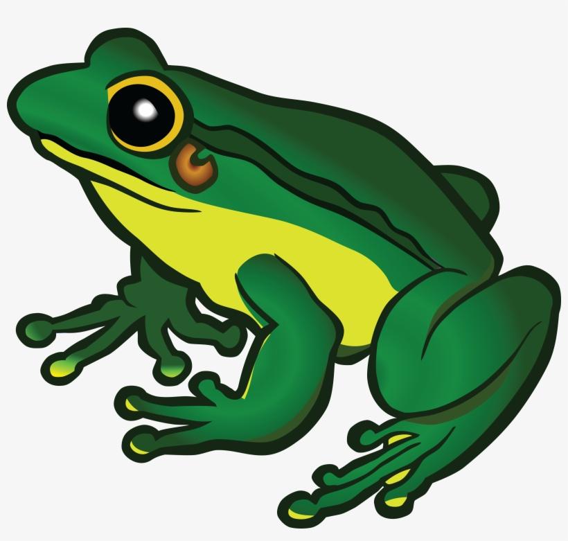 Frog Reading Book Meme