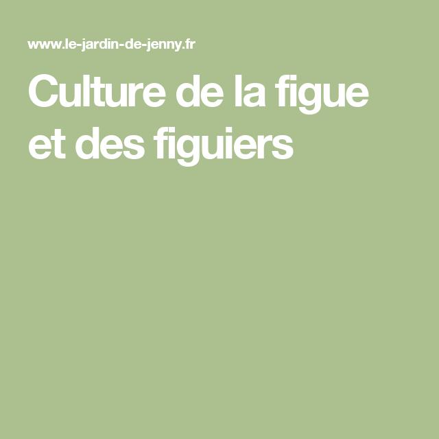 Culture de la figue et des figuiers