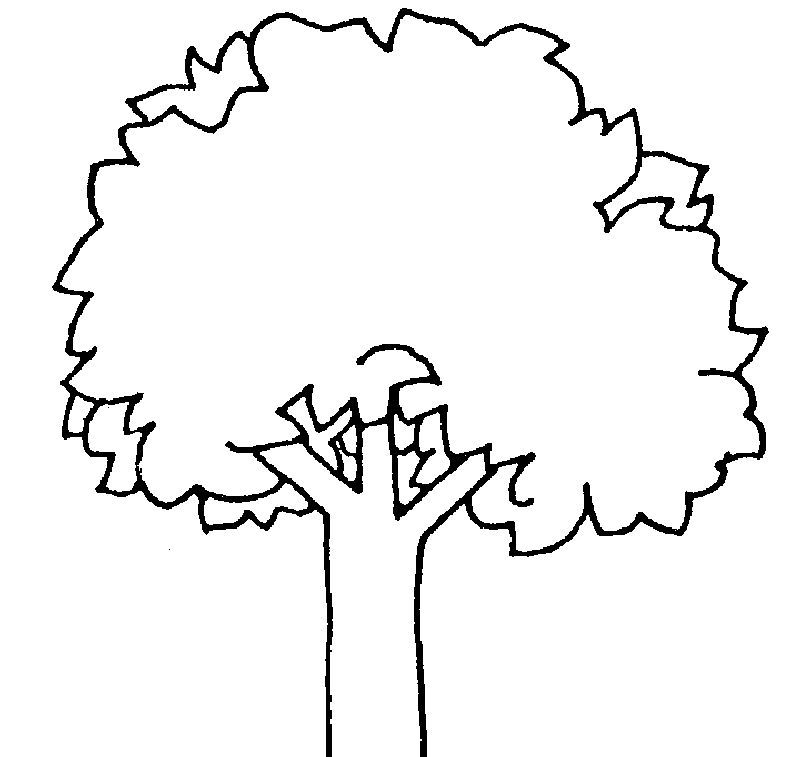 Bare Tree Coloring Pages Trees Are Plants That Have Stems And