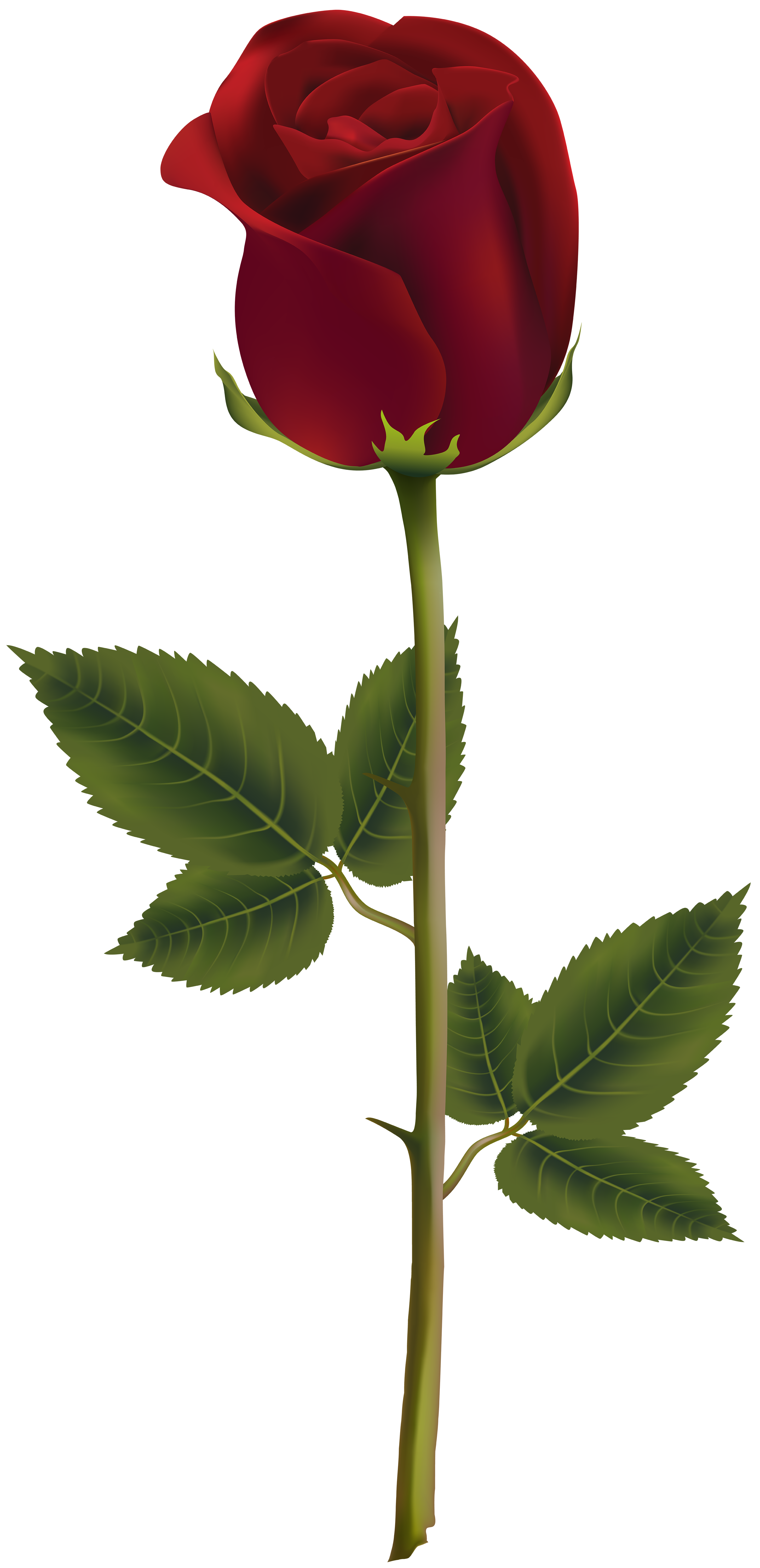 Red Rose Dark Transparent PNG Image Flower png images