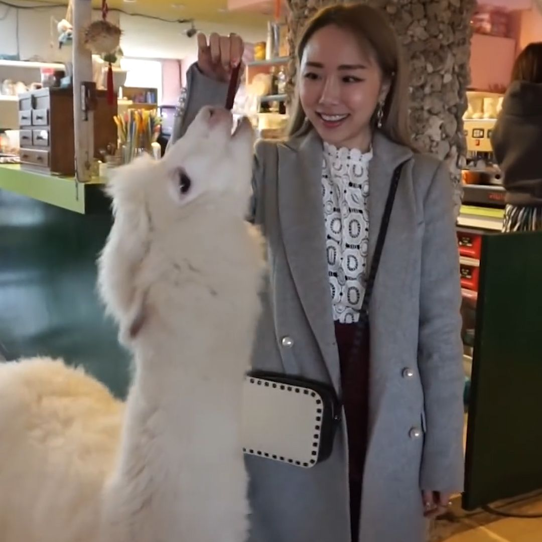 This alapaca themed cafe in Taipei, Taiwan lets customers get up close and personal with some fluffy friends - perfect if you're looking for weird and wonderful things to do.