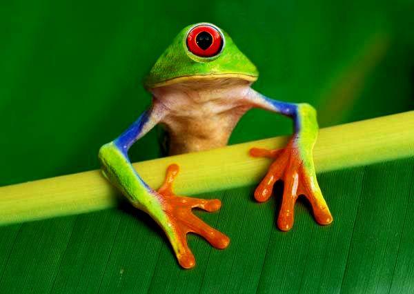 fukushima frog   Randy\'s Freaky Barn (Animal Mash Ups)   Pinterest