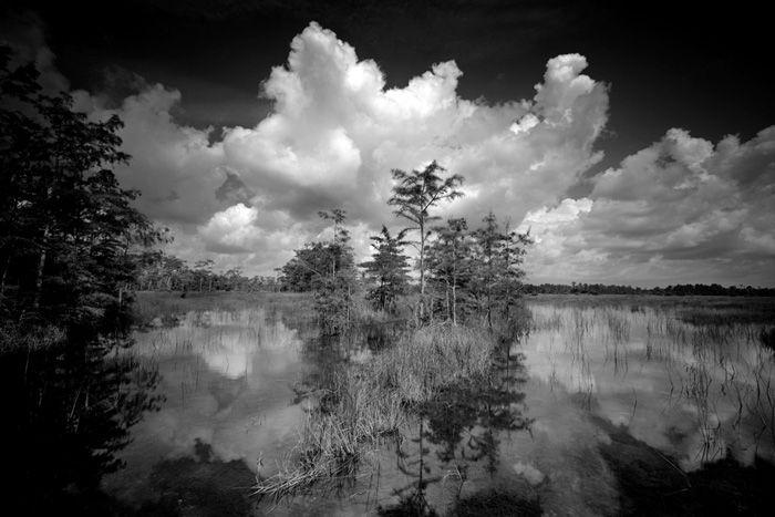 Clyde Butcher Black And White Fine Art Photographer Big Cypress National Preserve 1 Western Everglades Foto Art Seen