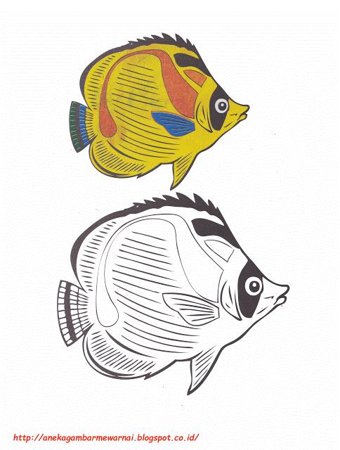 Aneka Gambar Mewarnai Gambar Mewarnai Ikan Kupu Kupu Untuk Anak