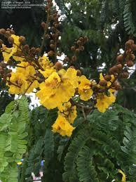 Florida Flower Identification Google Search Flower Identification Flowers Plants