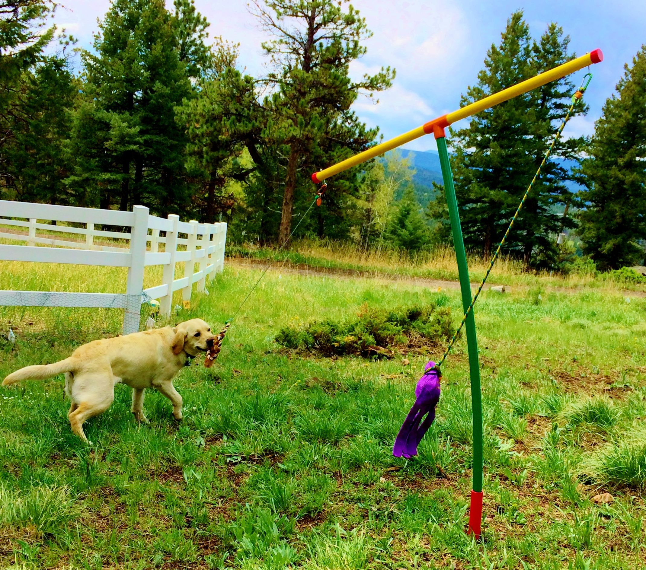 Dog · Back Yard Dog Toys ...