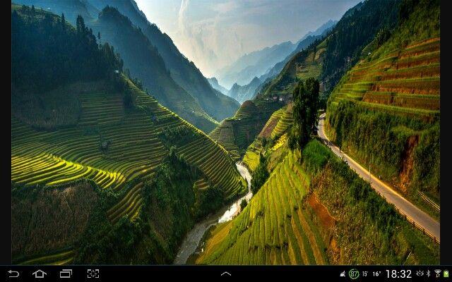 Campos de arroz diabólicamente colocados.