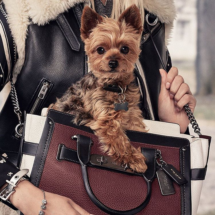 Coach Swagger Bag * Life's too short to carry ugly bags * The Inner Interiorista