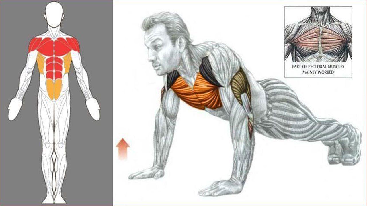 New Video By مهووس عضلات كمال الاجسام On Youtube تمارين الضغط البوش آب شرح فوائد تمرين الضغط البوش أ Home Exercise Routines Push Up Workout Workout Routine