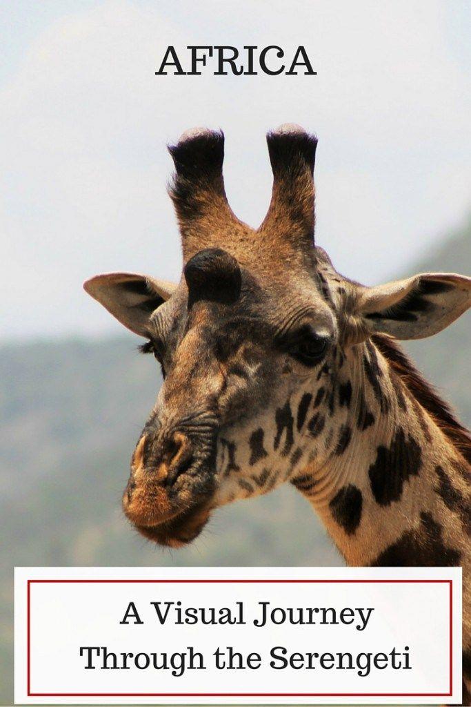 A Visual Journey Through the Serengeti- Photo Essay