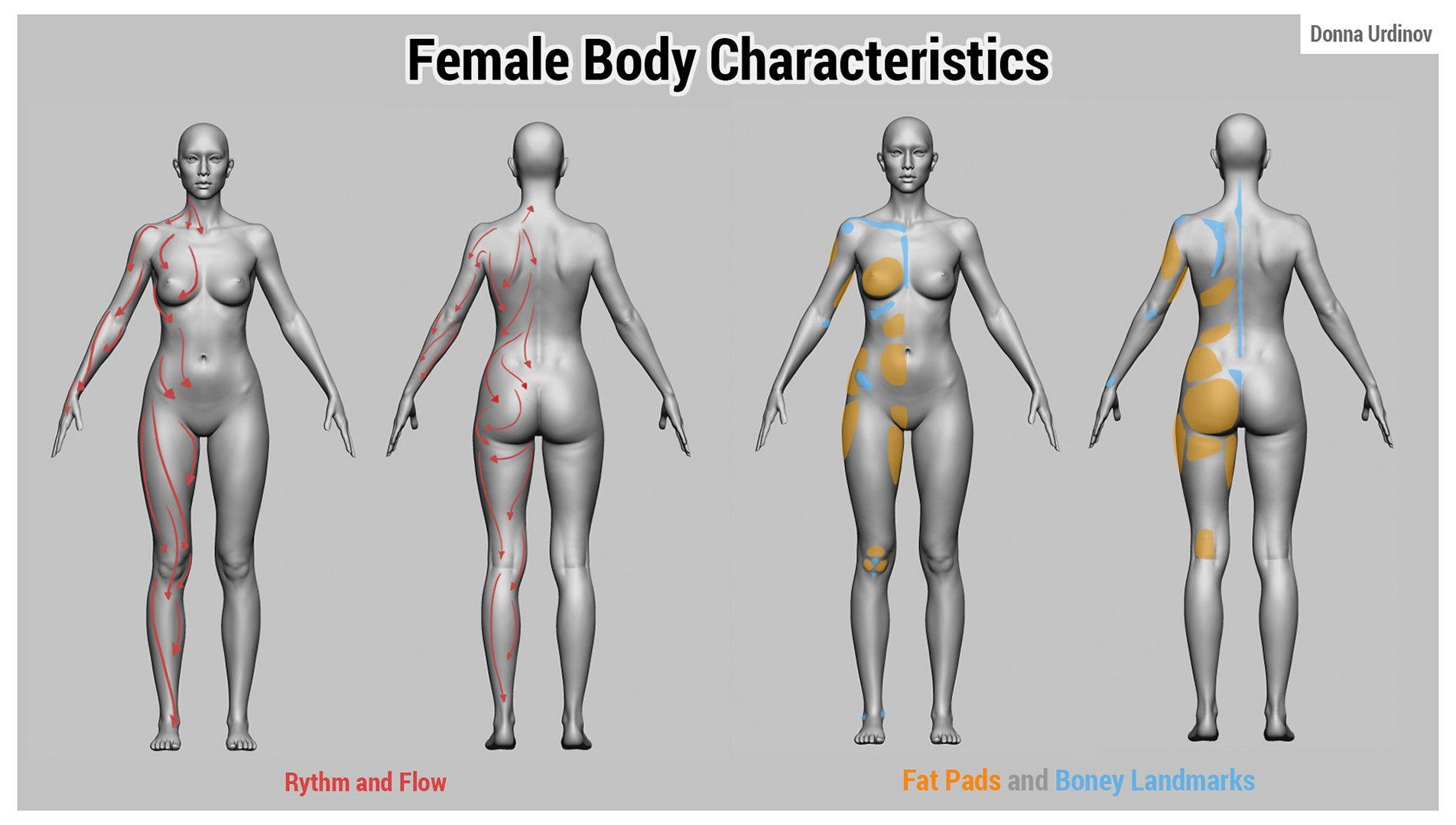 Artstation Female Anatomy Tutorial Donna Urdinov Anatomy Ref