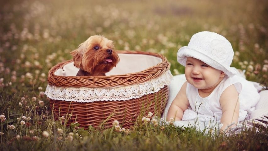 Cute Baby Wallpapers 41 Hd Wallpapers Baby Dogs Cute Baby Wallpaper Cute Puppies Baby and dogs hd desktop wallpapers