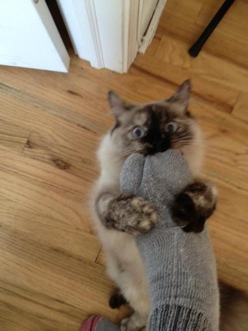 footcat